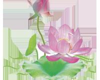 Phật Pháp vấn đáp 2014