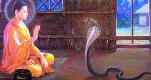 Kho tàng là rắn độc