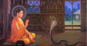 Vua rắn núi Phổ Đà